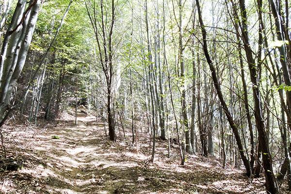 Backpack Nerd - Богдан - най-високият връх в Средна гора