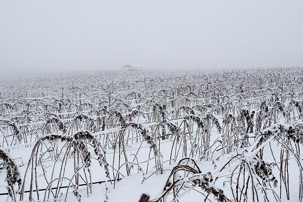 Backpack Nerd - За малиново вино до хижа Тръстеная