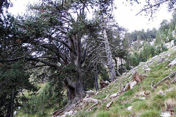Backpack Nerd - Връх Стефани - тронът на Зевс, Олимп, Гърция
