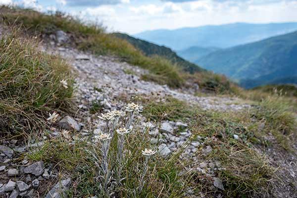Backpack Nerd - Беклемето, хижа Козя стена, хижа Ехо, връх Юмрука